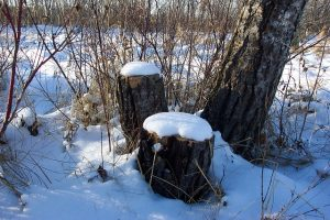 snow-16842_640