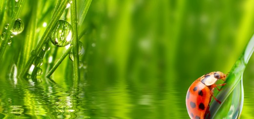 grass-plants-water-drops-dew-wallpaper-1